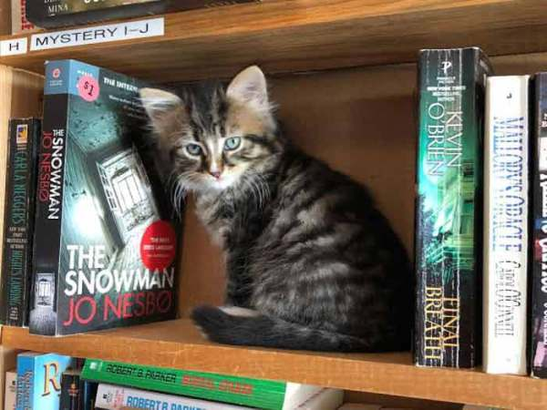 bookstore-5