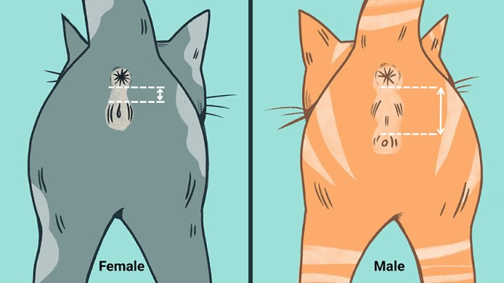 how-to-tell-a-boy-kitten-from-a-girl-kitten