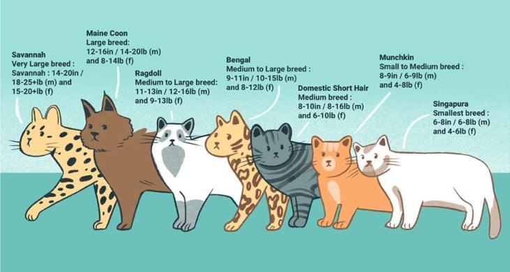 when is a cat full grown