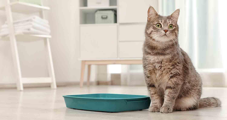 non clumping cat litter
