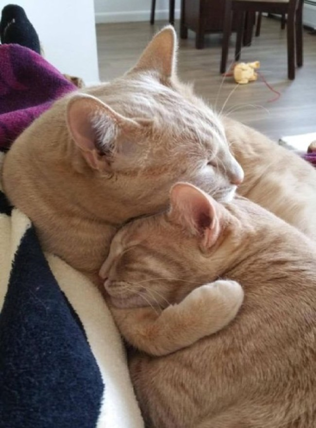 2 ginger cuddle