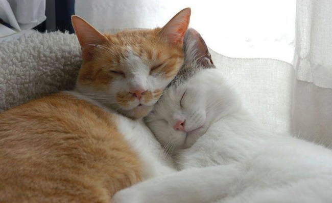 cuddles 2