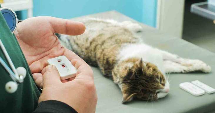 feline-leukemia-diagnosis