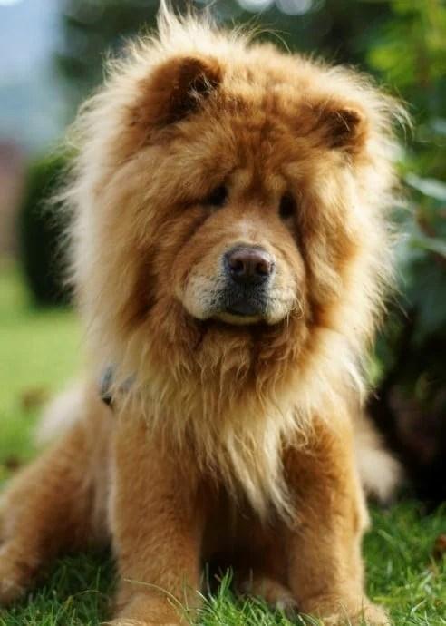 Lion Haircut : haircut, Cutest, Photos, Internet!, Doodles