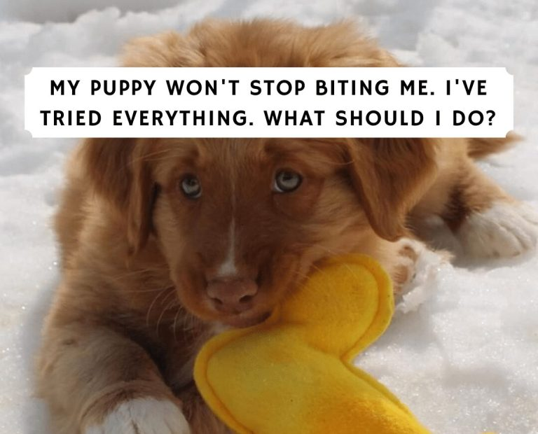 My Puppy Won't Stop Biting Me – What Do I Do?