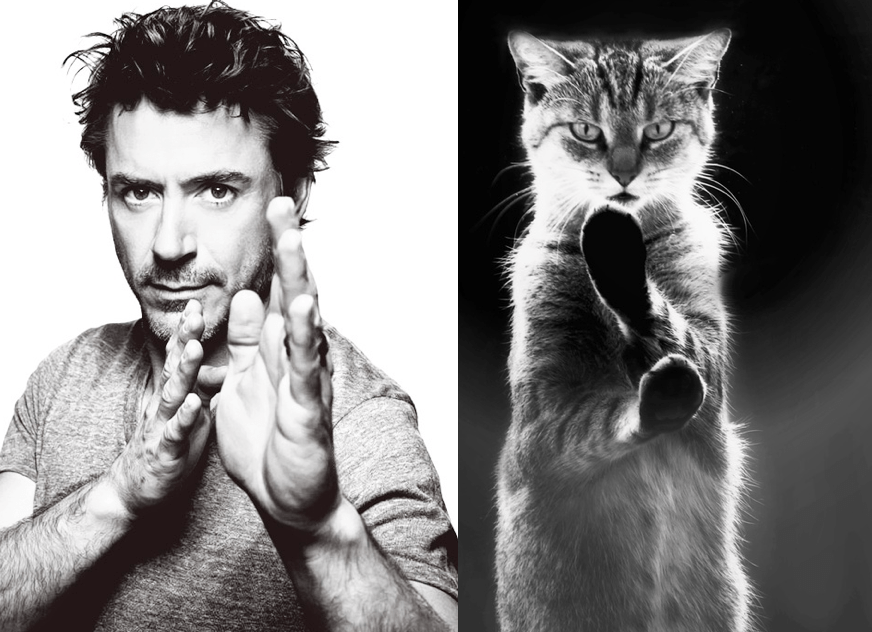 robert downey jr with kittens tumblr