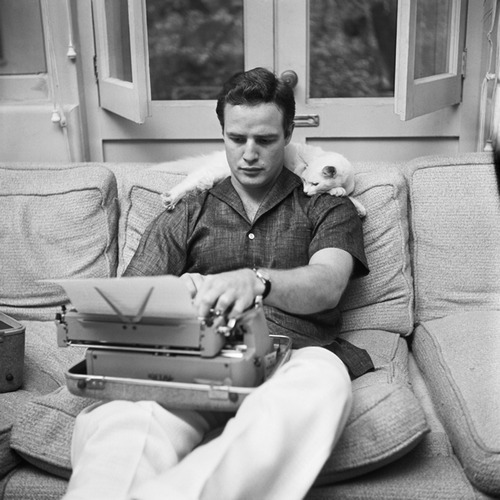 marlon brando and kitten