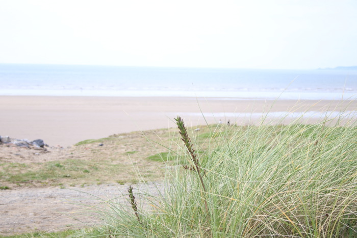 Aberavon Beach grass View