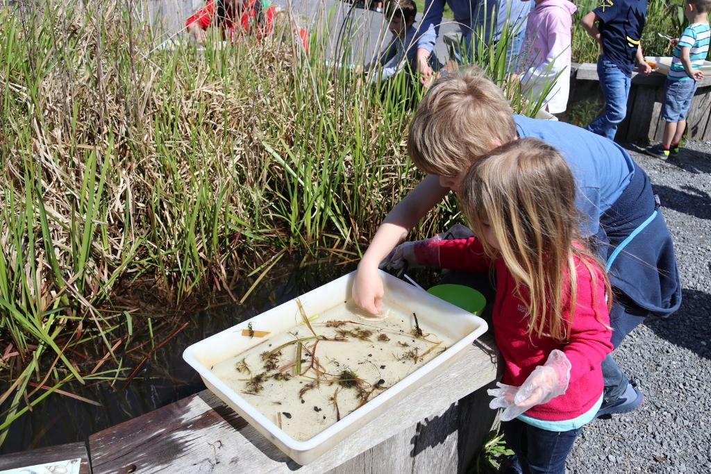 Llanelli Wetlands Centre - Pond Dipping