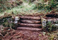 A flight of steps was discovered under a carpet of undergrowth