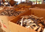 so many different types of dried fish!