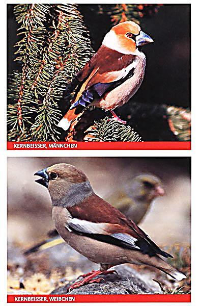Vögel am Futterhaus Buch jetzt bei Weltbildch online