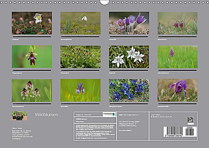 Wildblumen Lexikon Mit Bildern wildblumen heimische wildblumen verschwinden was gartler f r