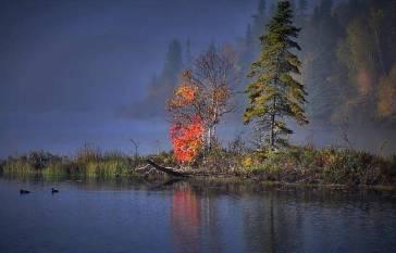 Herbstliche Bäume an einem See in Kanada
