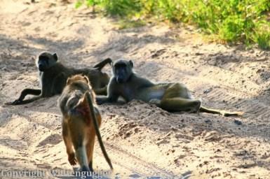 Best of Botswana-15