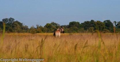 Best of Botswana-33