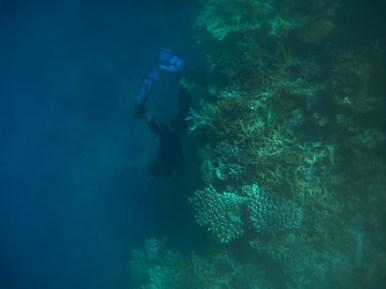 Fiji-51