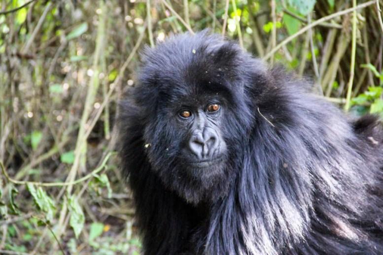 Ruanda-10