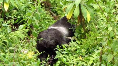 Ruanda-32