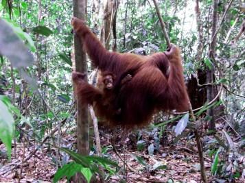 Sumatra (47 von 80)