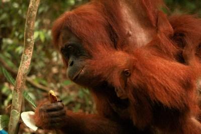 Sumatra (48 von 80)