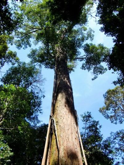 Sumatra (66 von 80)