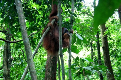 Sumatra (73 von 80)