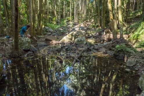 Jungle mirror