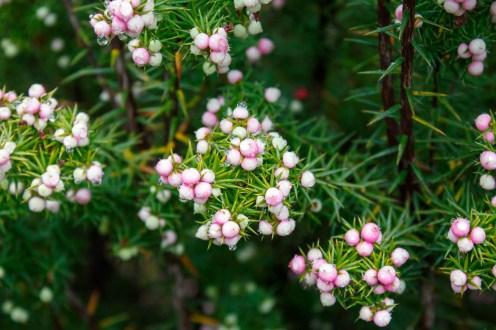 Precious berries