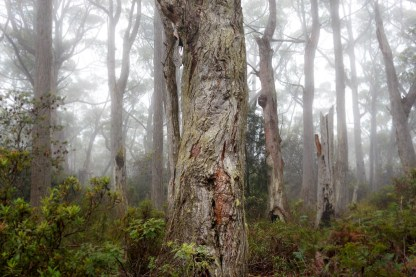 Magic forest at Cape Raoul