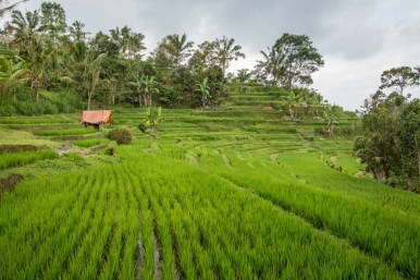 More rice terraces