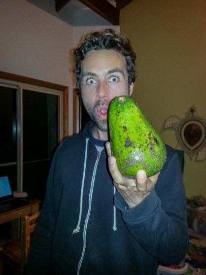 The biggest Avocado in the world