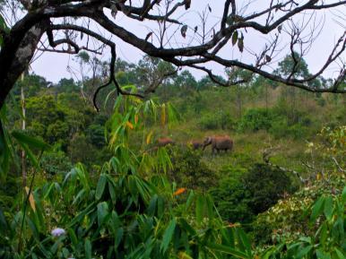 Bissel unscharf, aber ja das sind wilde Elefanten! Nicht gemogelt!