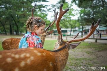 Nara Reindeer