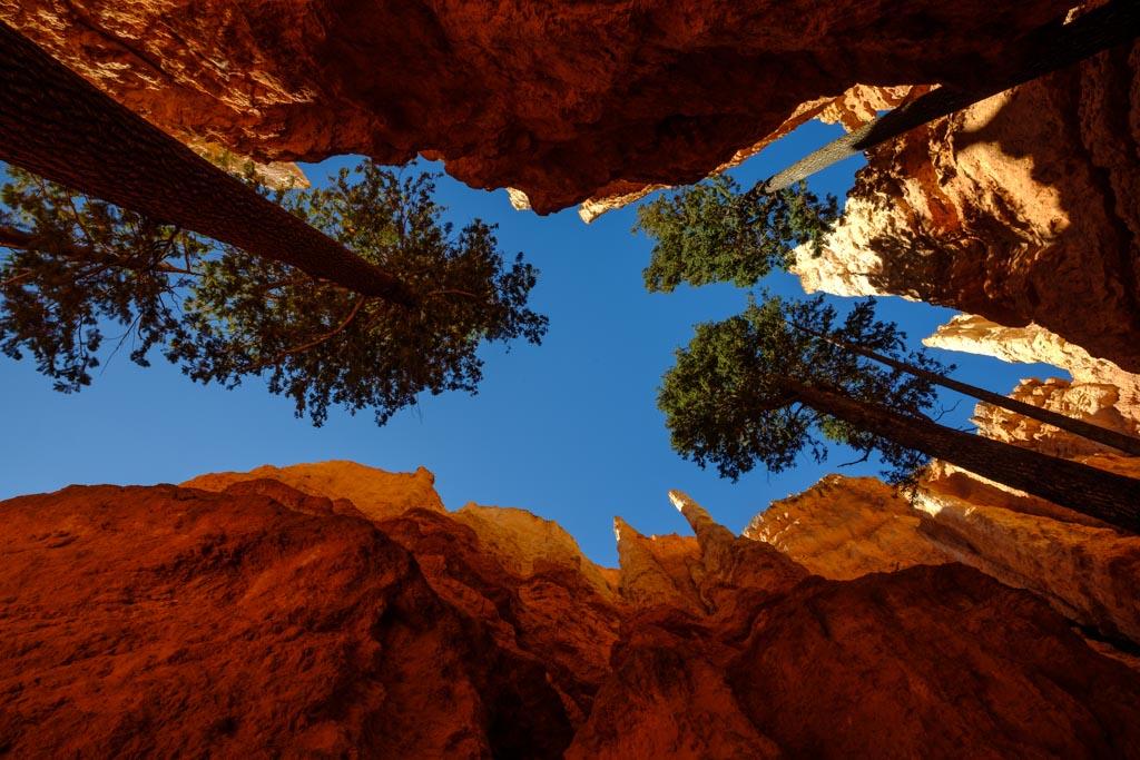 Bäume im Bryce Canyon