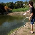 Andreas bei der Arbeit. Tausende von hungrigen Fischen wollen endlich was zwischen die Kiemen bekommen.