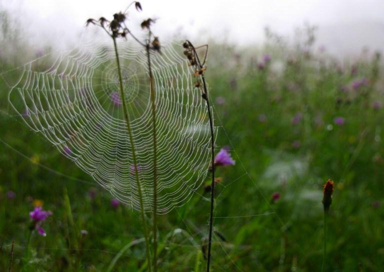Drei Tage Wildnis - Spinnennetz
