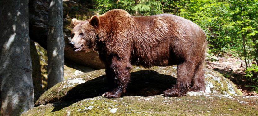 Bohnen und Bären im Bayerischen Wald