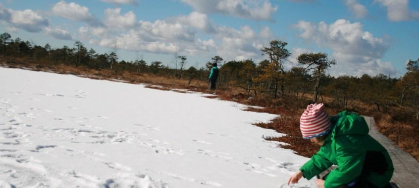 Soomaa: Durchs gefrorene Moor