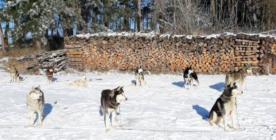 Huskyranch Waldviertle