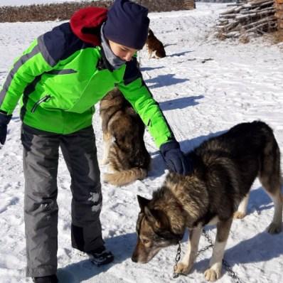 Hundeschlitten Waldviertel