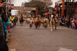 Ft Worth Cattle Drive