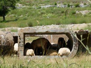 Diktator Hoxha wollte 750 000 Bunker bauen, bis zu seiner Entmachtung waren eine halbe Million errichtet. Die Reste dienen heute noch verschiedenen nützlichen Zwecken.
