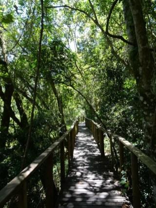 Ein gut ausgebauter Wanderweg führt durch den Dschungel