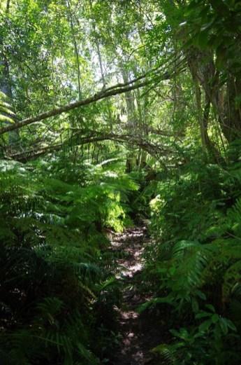 Der Dschungel ist kaum zu durchdringen