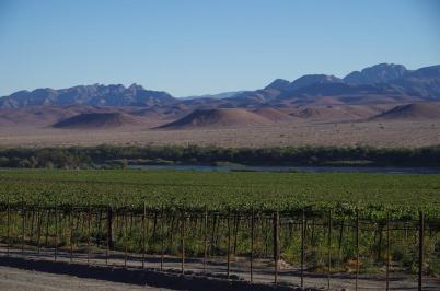 In Namibia wird Wein angebaut, jedoch nur zum Vernaschen der Trauben, die überwiegend nach Europa exportiert werden.