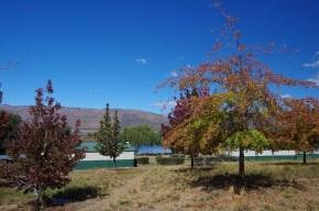 In Südafrika ist es Herbst – man sieht es deutlich an der Laubfärbung.