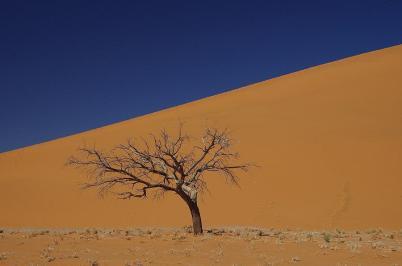 Nichts als Sand – die Dünen von Sossusvlei