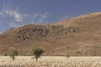 Köcherbäume säumen die Einfahrt zur D707