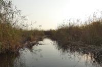Der Kwando River ist von einem riesigen Schilfgürtel umgeben.